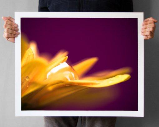 Chrysanthemum Macro Photograph