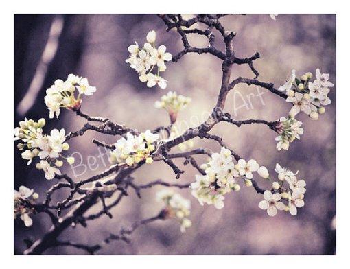 Lavender Blossom Branch
