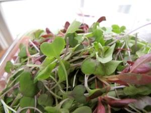 trader joe's organic micro greens